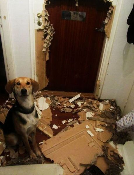 tenant-dog