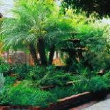 250.Courtyard.Plants